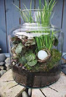 plant terrarium kits, glass plant terrariums
