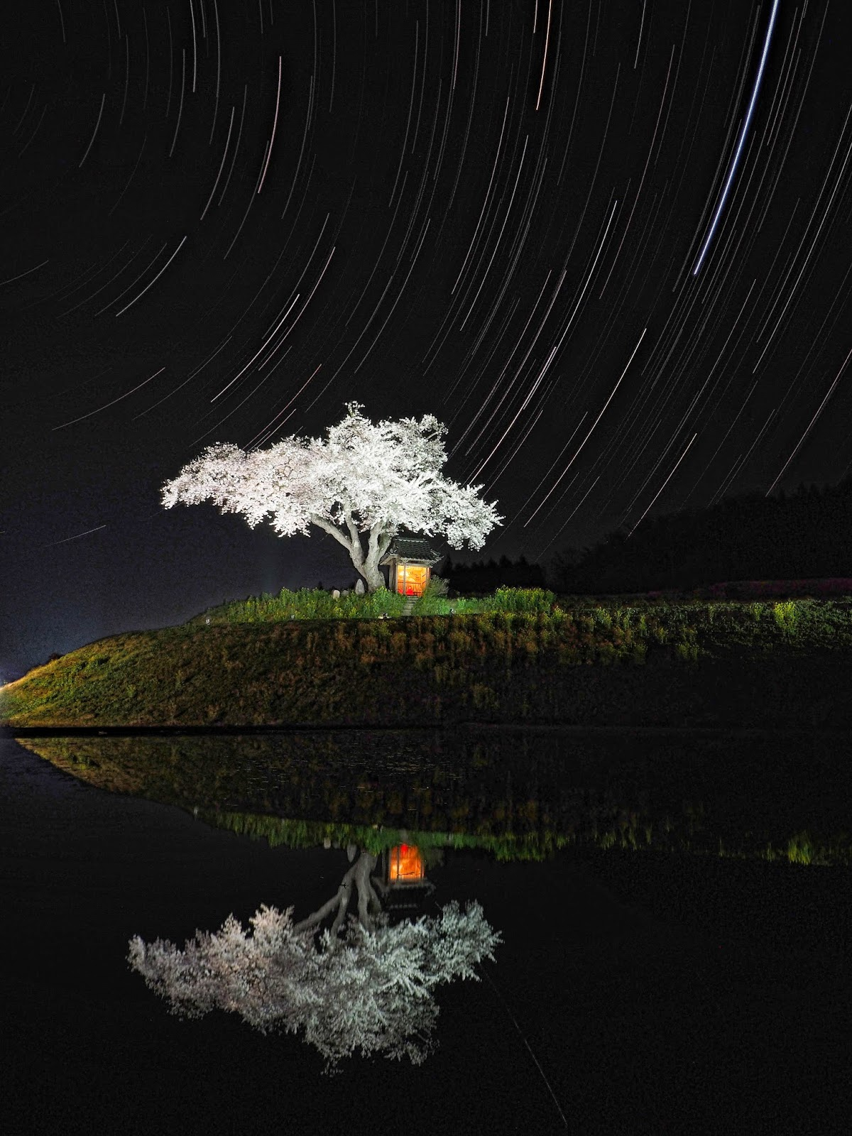 小沢の桜 ライトアップ