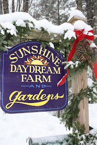 Sunhine Daydreams Studio