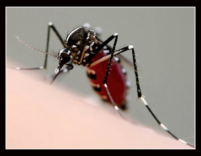 Mengusir nyamuk dengan cara alami