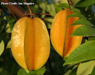buah buahan, belimbing, buah belimbing, manfaat buah belimbiing