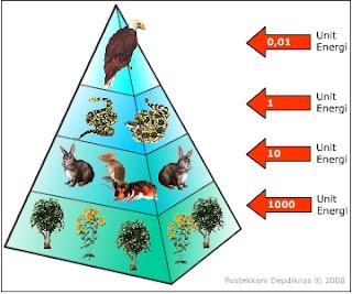 Ekosistem aliran energi siklus materi dan aliranmateri dalam piramida energi adalah piramida yangmenggambarkan hilangnya energi pada saat perpindahan energi makanan di setiaptingkat trofik dalam suatu ekosistem ccuart Image collections