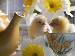 Chicks In A Teacup
