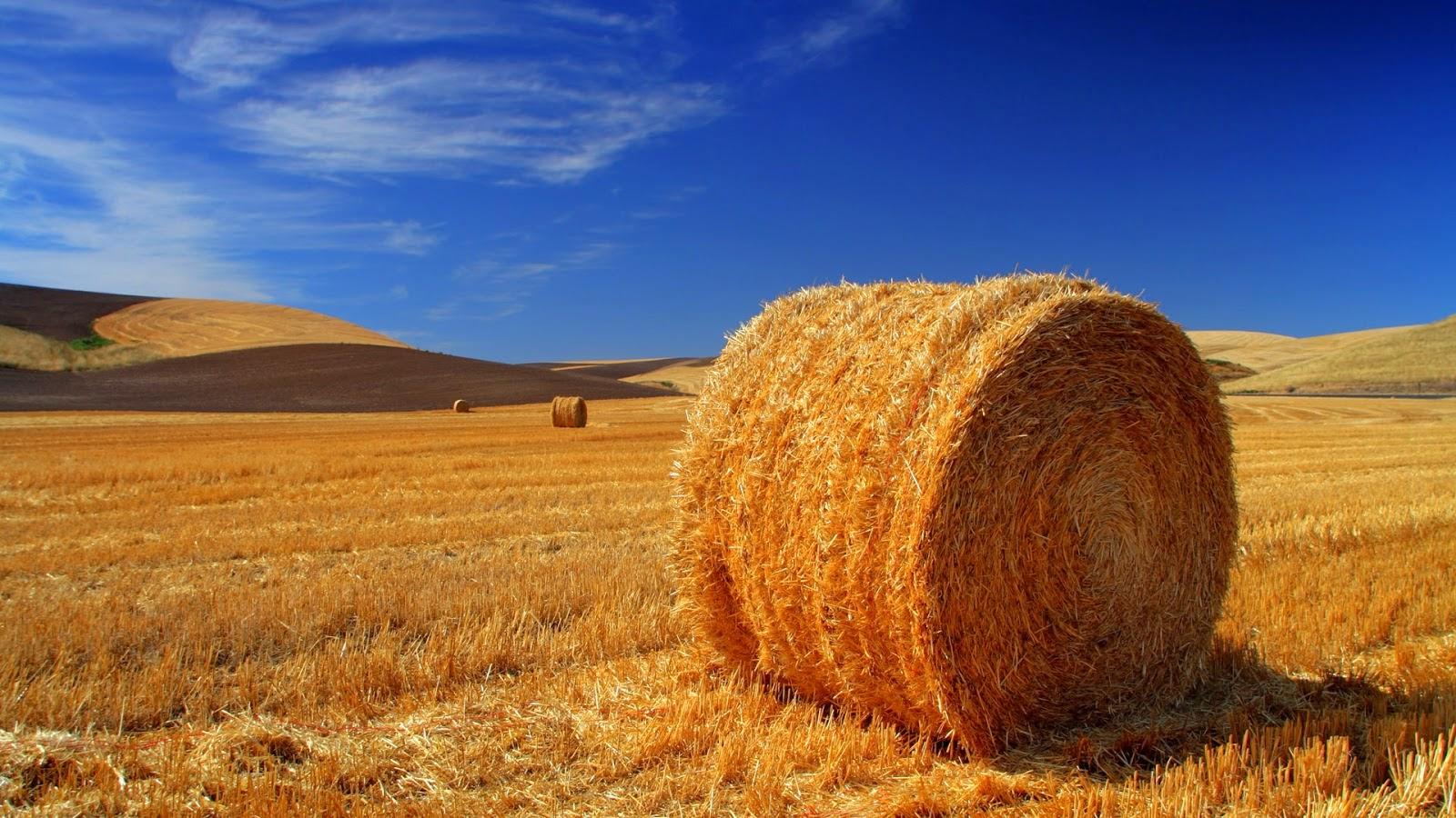 cos'è il reddito agrario