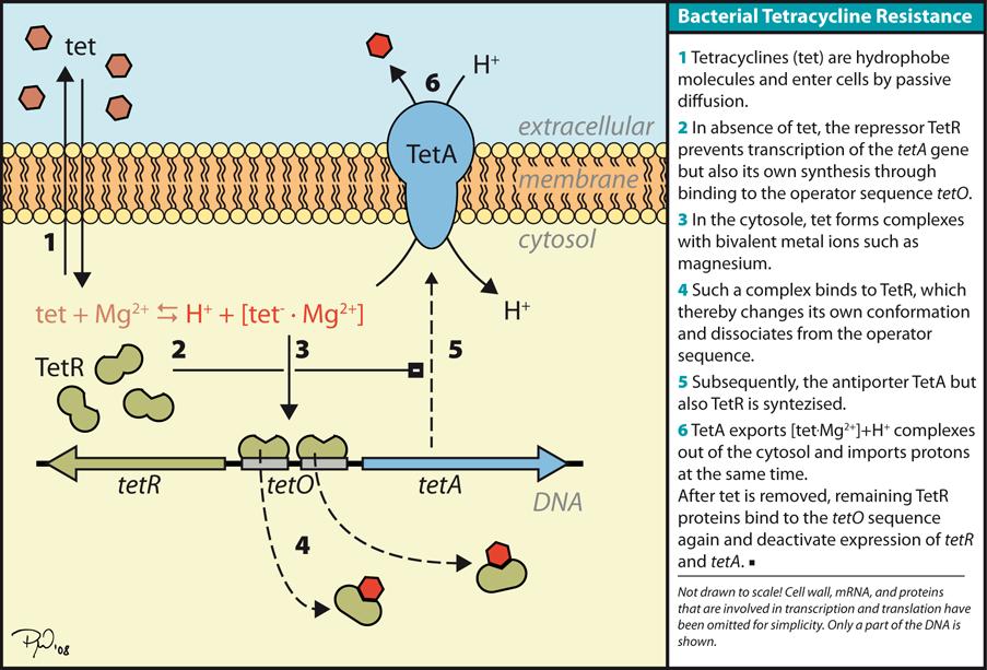 Doxycycline   wikipedia