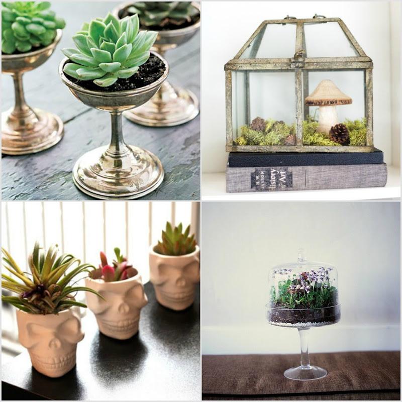mini jardins em vidro : mini jardins em vidro:Suculentas em taças de prata. 2. Casa de Vidro com jardim de