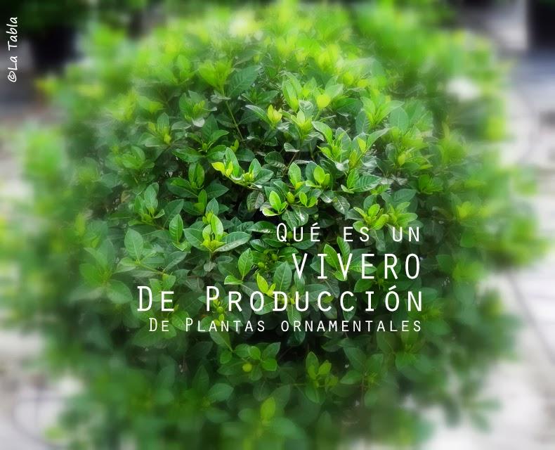 Qu es un vivero de producci n de plantas ornamentales for Plantas que hay en un vivero