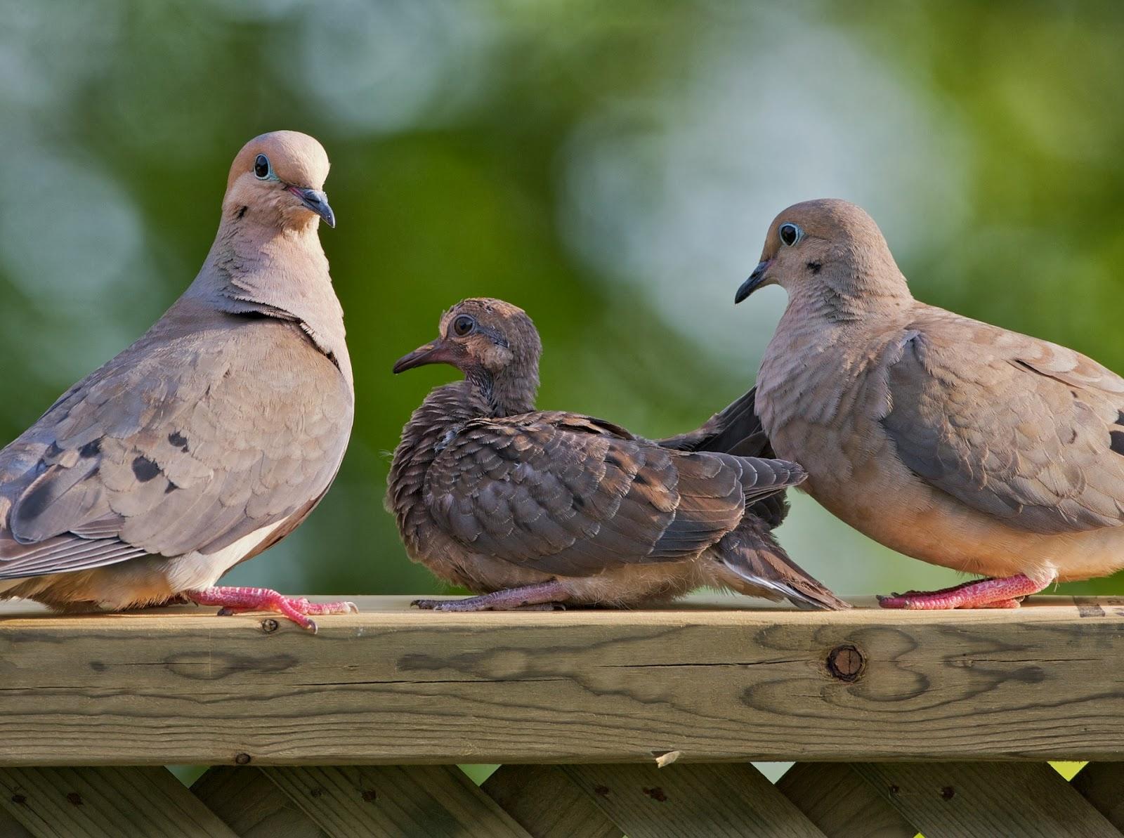 The animal alliance office to kill a dove carol l edwards photography buycottarizona