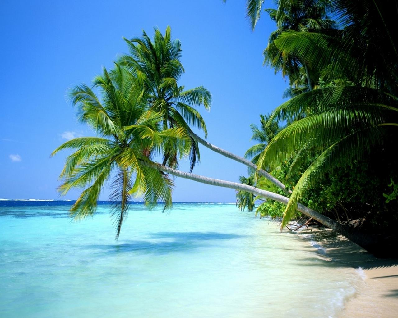 http://4.bp.blogspot.com/-iizs4SZxD2I/T7DiiVwLOlI/AAAAAAAABA4/GAd86Ka9rWo/s1600/fond-ecran-paysage-paradisiaque.jpg