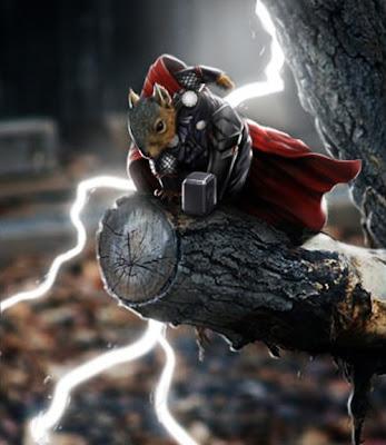 Ardilla Thor