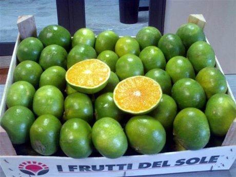 La stagione degli agrumi for Mapo frutto