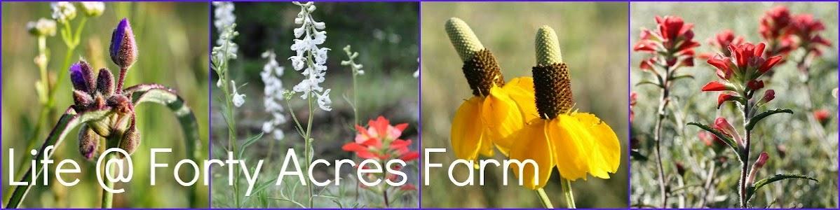 Life @ 40 Acre Farm