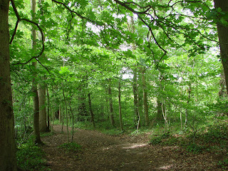 Dappled shade under fresh spring foliage, Cotswolds, England