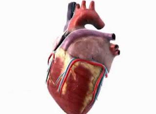 Stress dan penyakit jantung