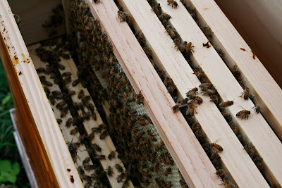 Frames in the hive