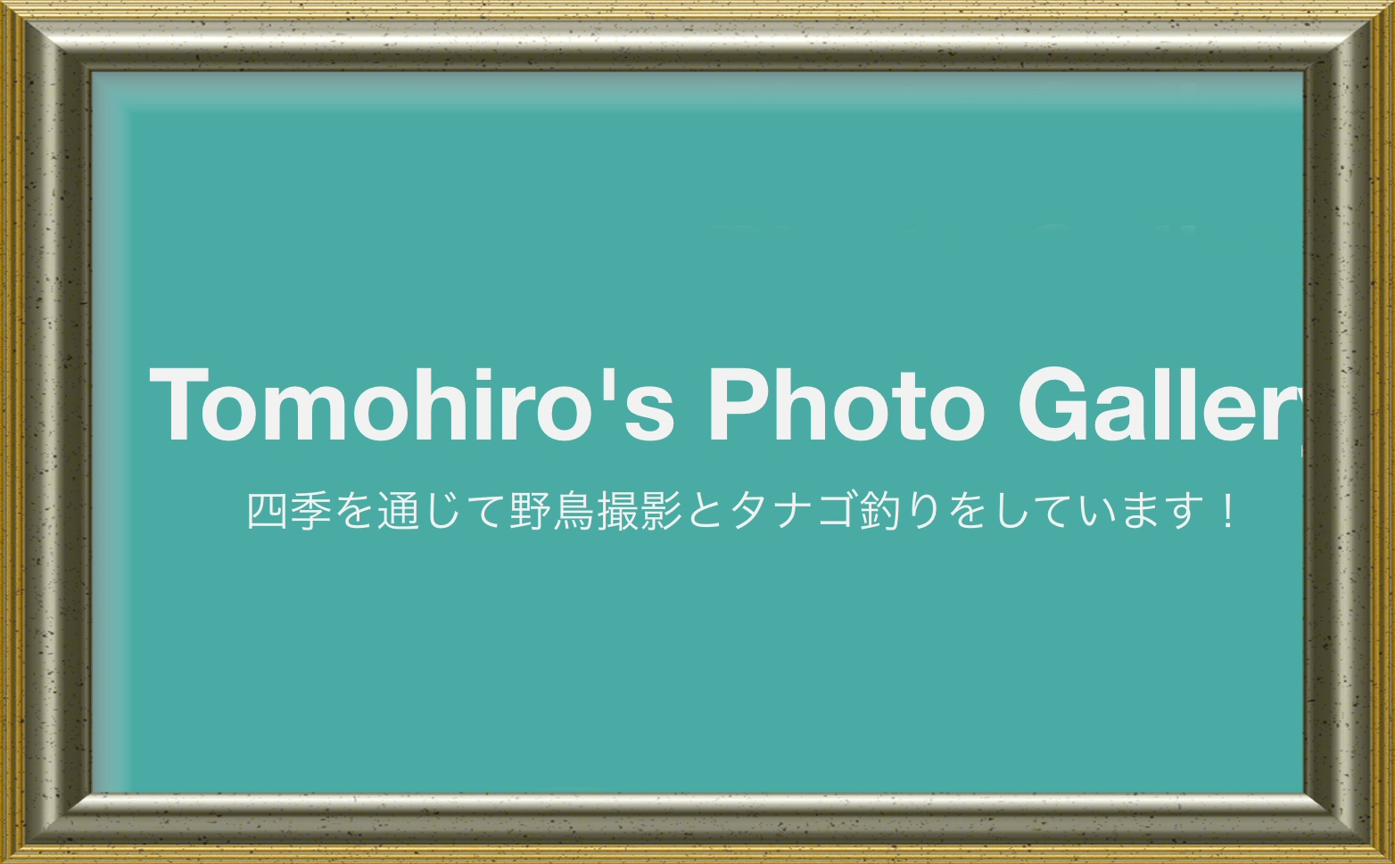 Tomohiro's Photo Gallety