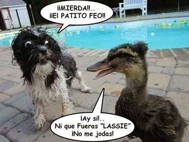 Humor entre animales