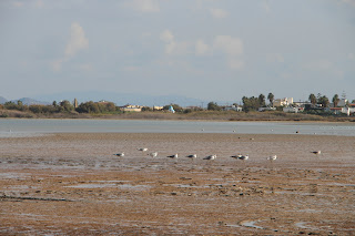 Tigaki Salt Pan