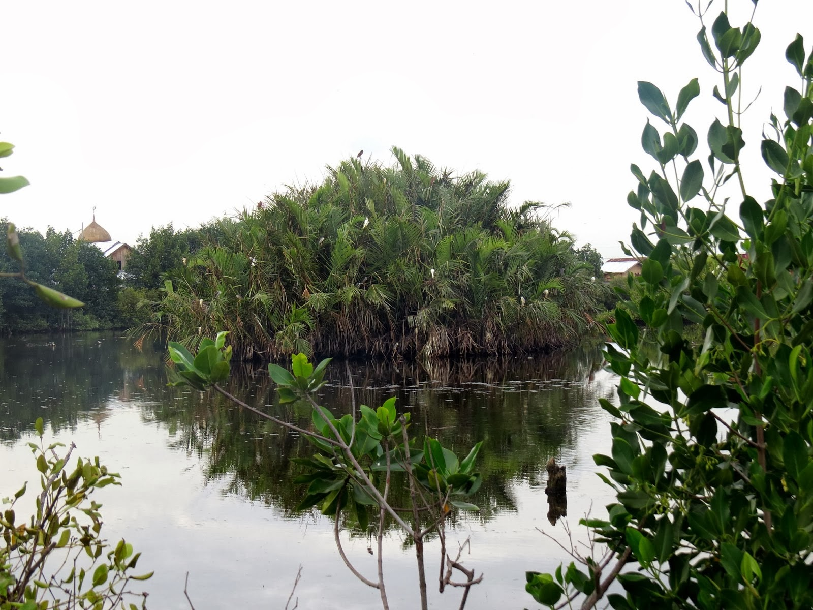 9th philippine bird festival in zamboanga city birds fly for Garden pond without fish
