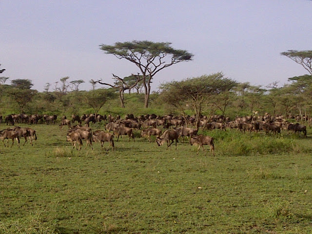 The Serengeti Migration is in Tanzania