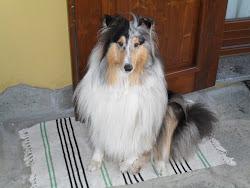 """il mio cane  """"NANETTE"""""""
