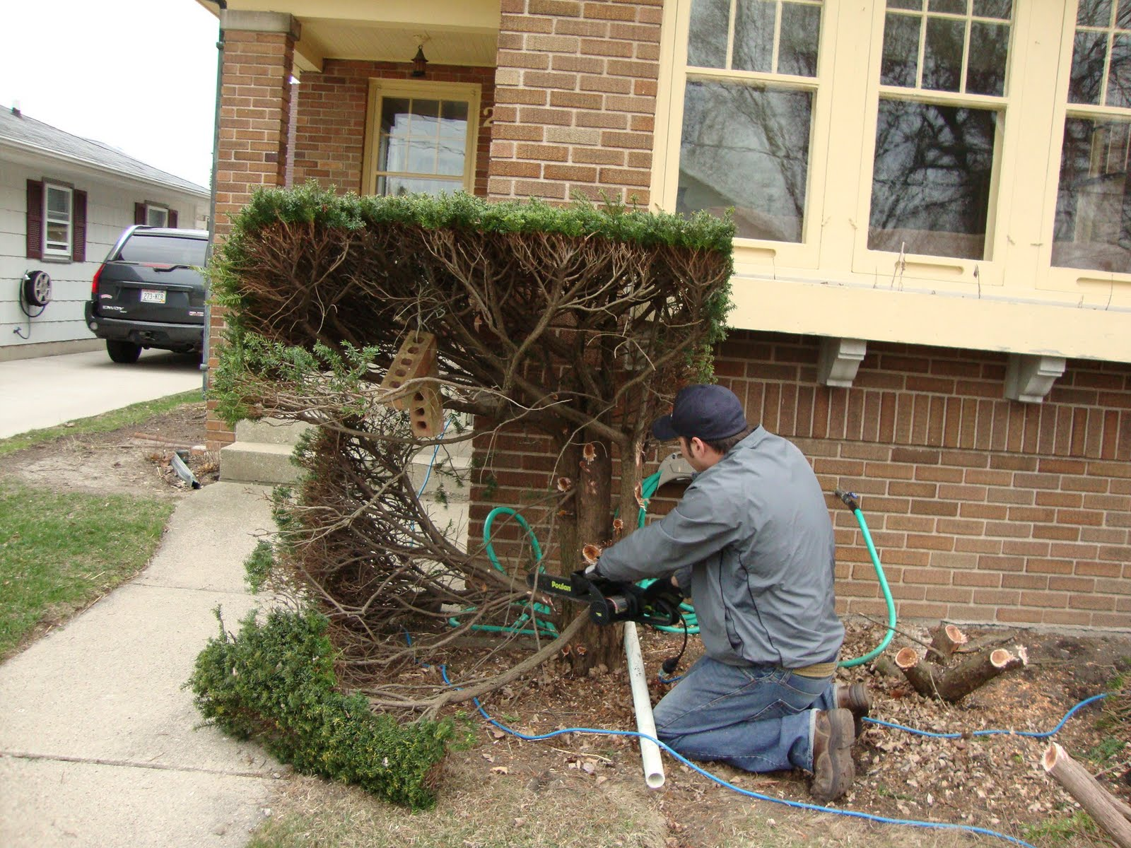 Communication on this topic: How to Remove Bushes, how-to-remove-bushes/