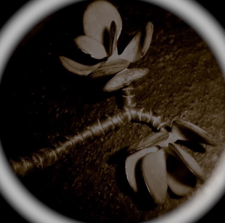 Flora Maracca