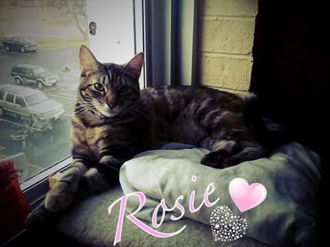 ROSIE:S DAYS