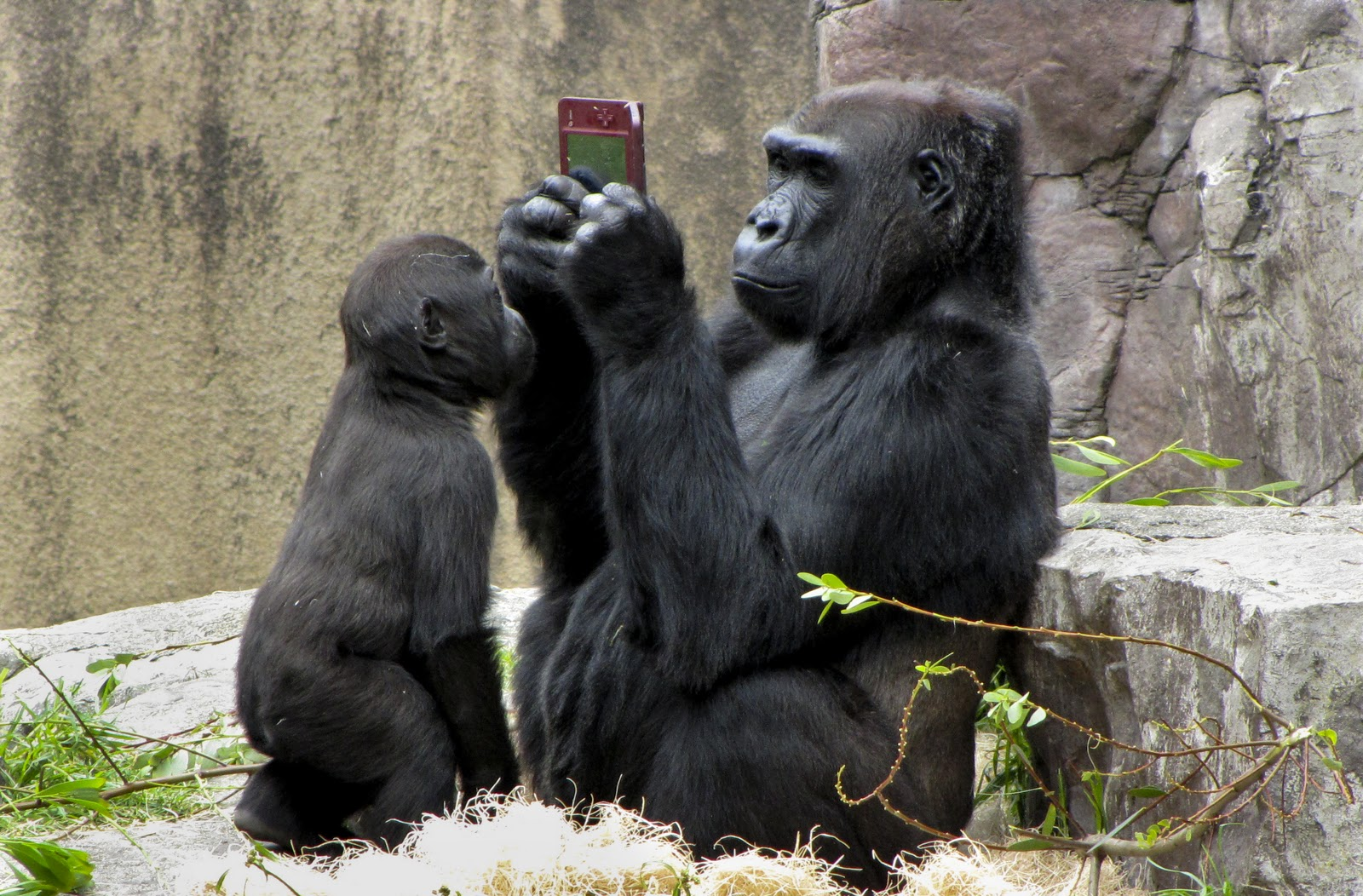 http://4.bp.blogspot.com/-ingPkc_orj4/UAL4UkadGjI/AAAAAAAAQAI/7BcBs_NHqPg/s1600/gorilla-playing-nintendo-003.jpg
