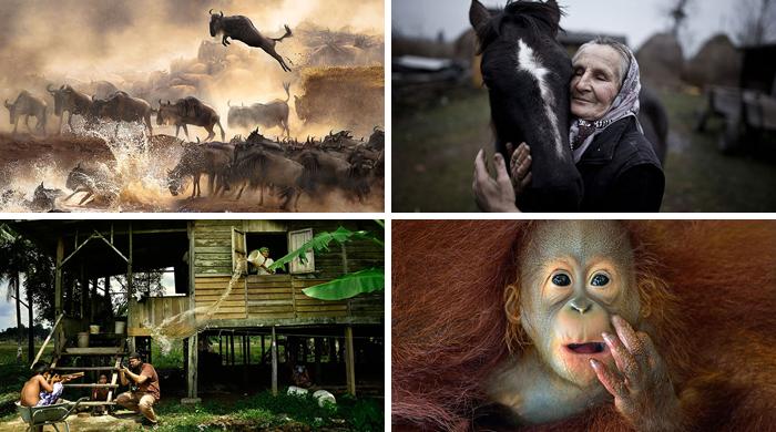 Los ganadores del Sony World Photography Awards 2014 se han anunciado