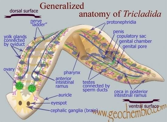 Blog de la clase de Biología y Geología de 1º de Bachillerato del ...