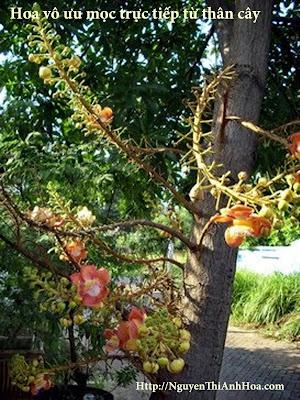 Hoa vo uu - Sala Flower