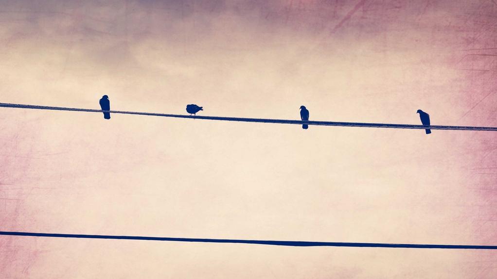 Pájaros en cable eléctrico