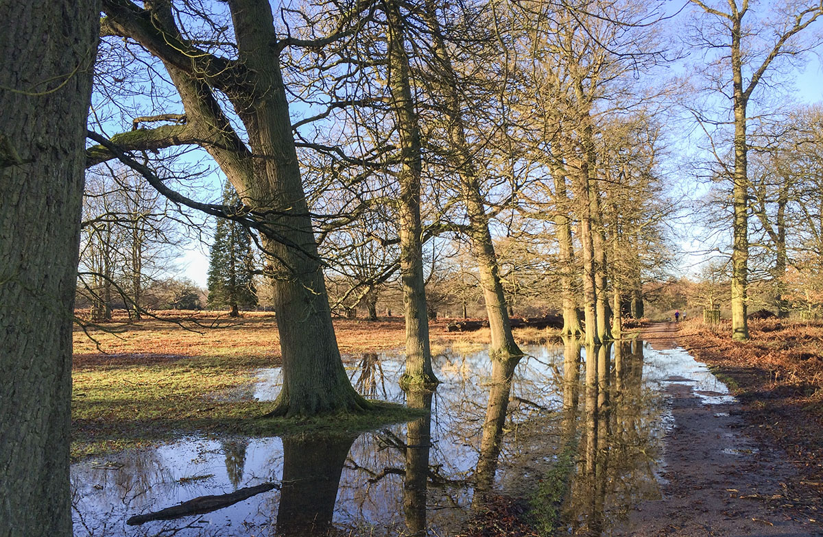 Flooded footpath in Knole Park, 26 December 2013.