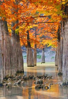 imagenes-paisajes-oleo