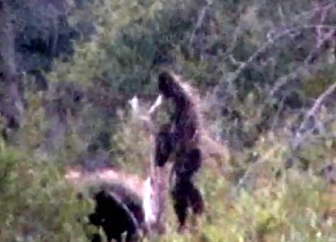 Bigfoot Spotted By Remote Aircraft In Colorado | Mr. Conservative ...