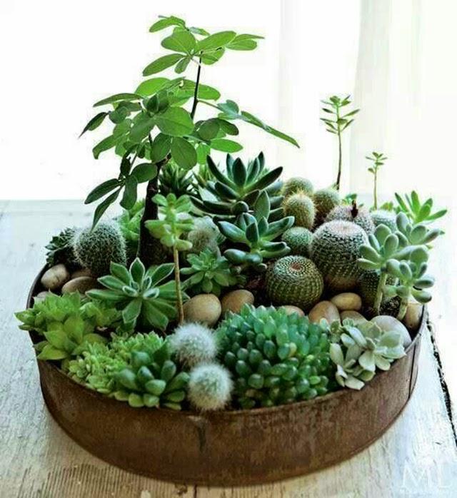decoración de interiores obsesión cactus hermanas bolena