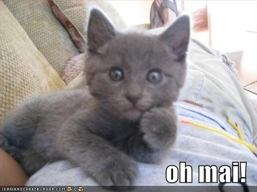 lol cat oh my