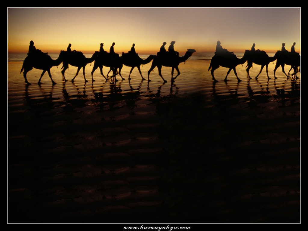 Camel Desert Background