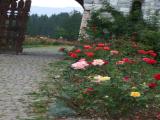 poarta cu trandafiri