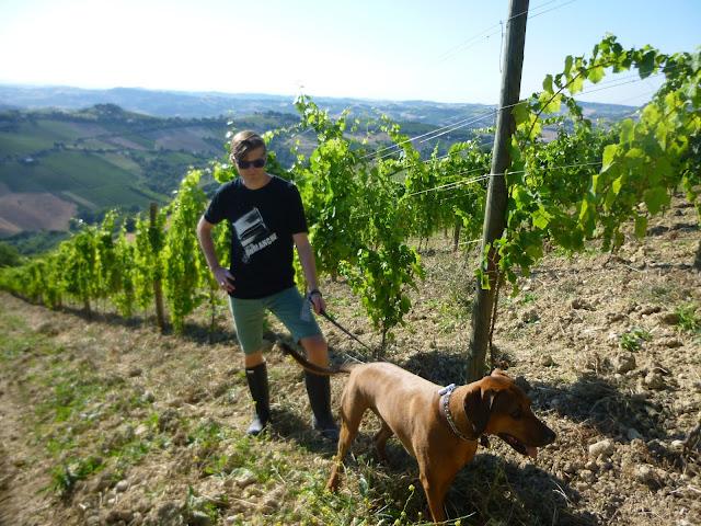 housesitting italian vineyard