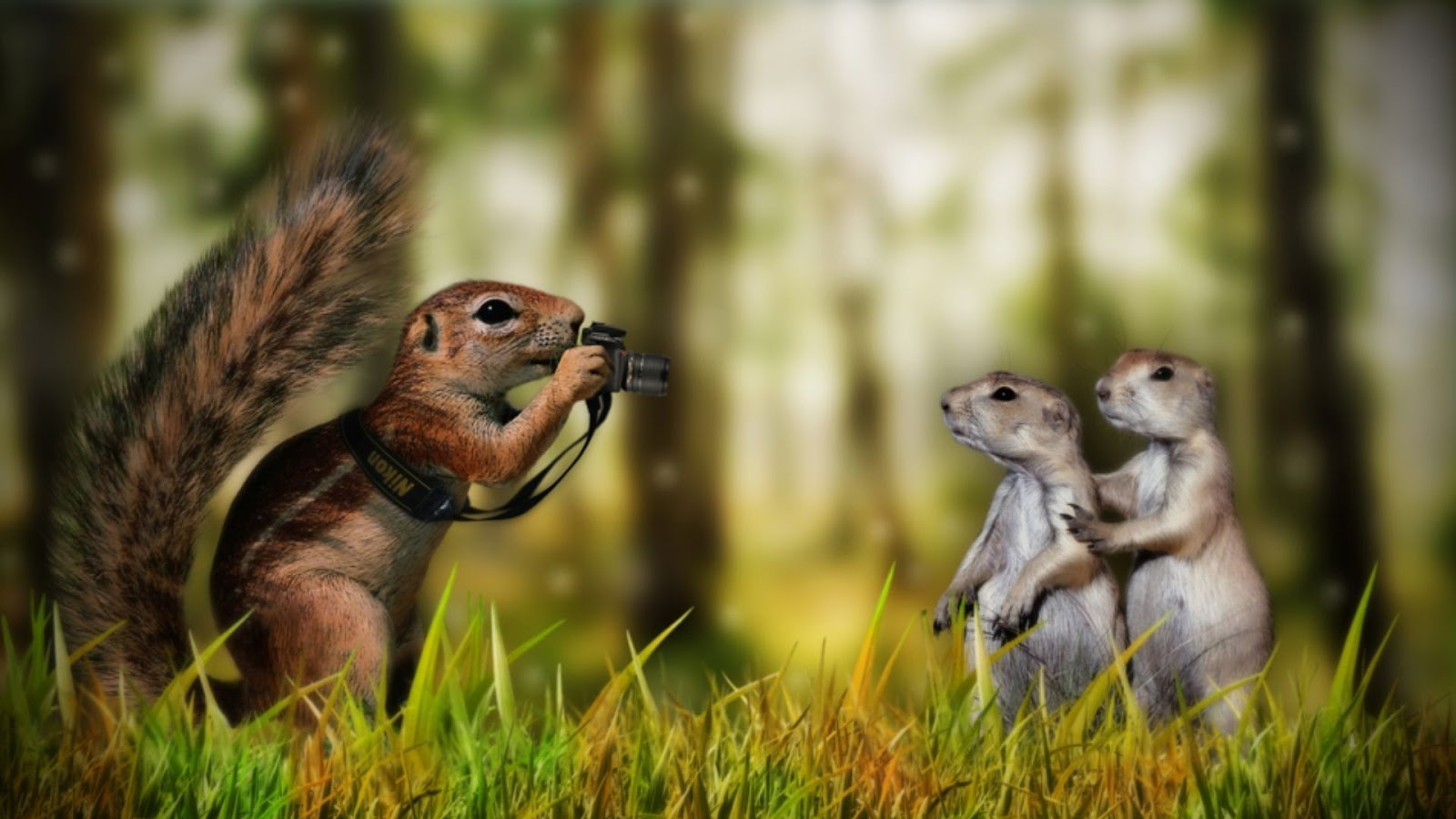 Animals Playing Funny Wallpapers Download HD