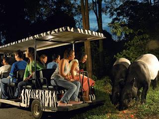 tempat wisata di singapore untuk anak, wisata malam, kebun binatang