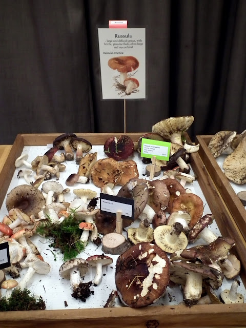 Rusulla varieties - not all of them edible mushrooms