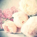 الزهور .. هى ضحكات الكوكب لنا حين نكون طيبين