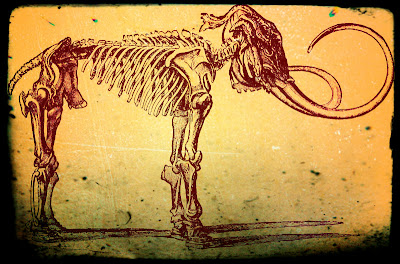 Vintage drawing of elephant skeleton