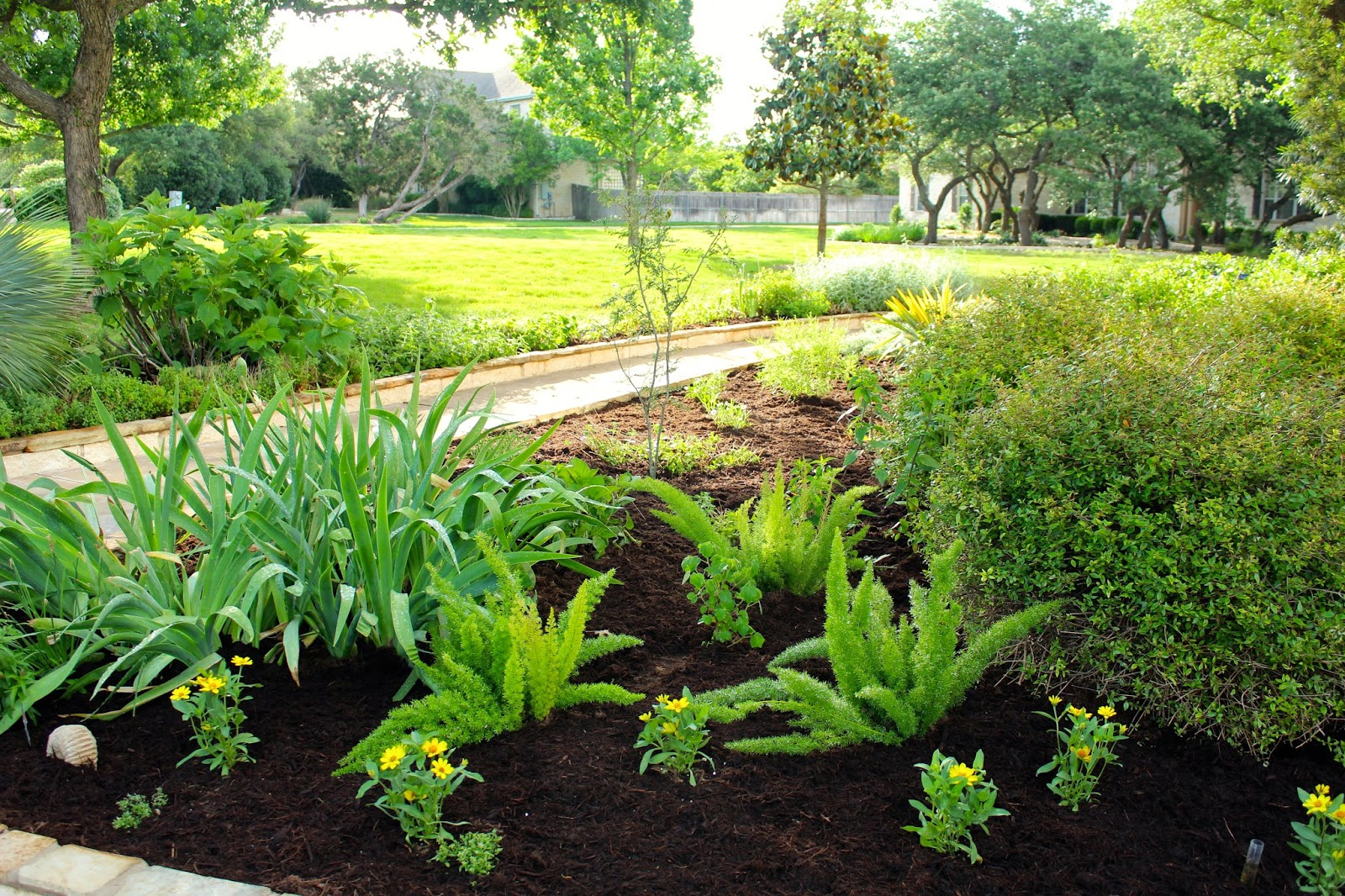 Landscaping With Ferns : Sharing nature s garden spring spruce up