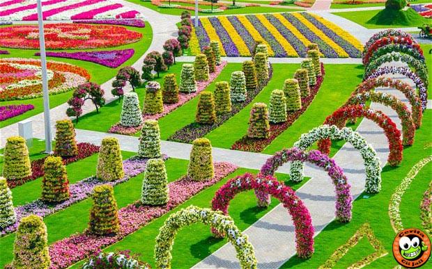Dubai Miracle Garden, Taman, Bunga, Terbesar, Di, Dunia