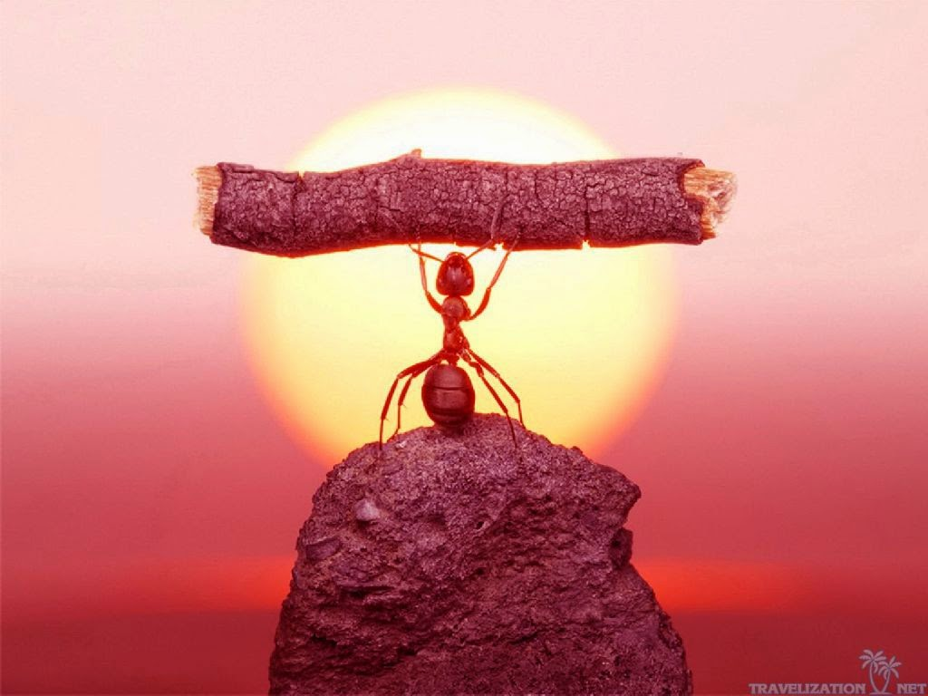 hormiga levantando pesas