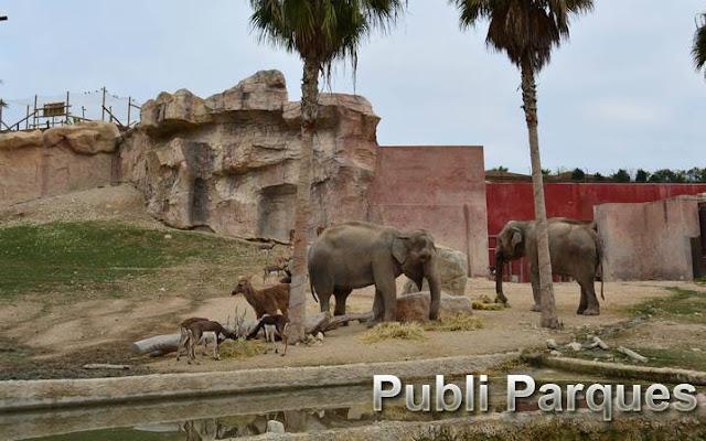 barasinghas con elefantes